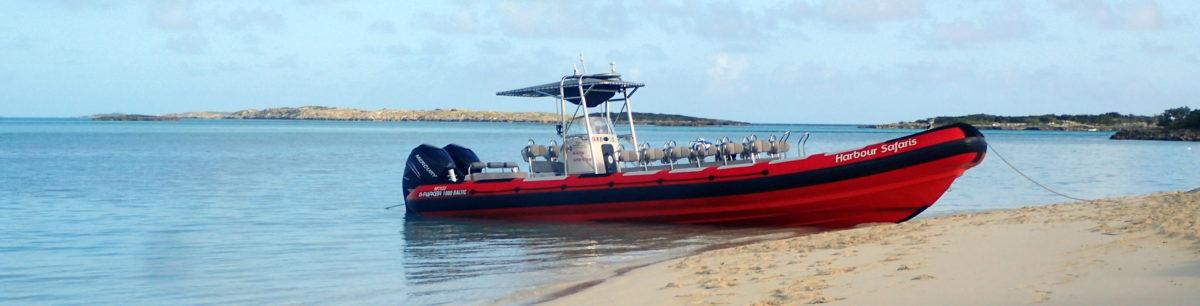 Harbour Safaris Boat Tour