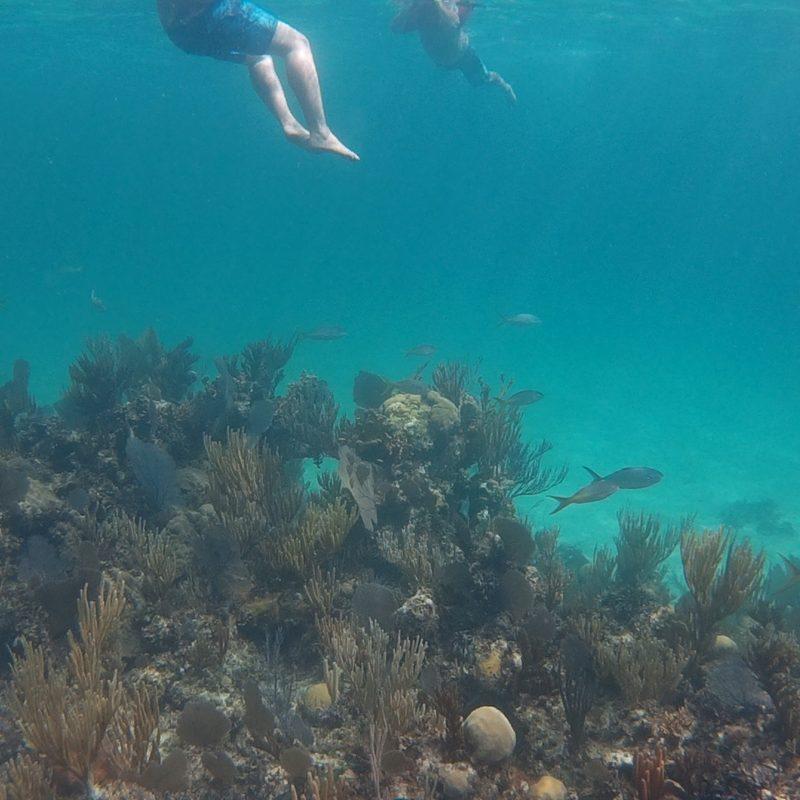 Rose Island Reef Snorkel