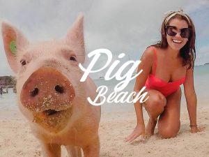 pig_beach_cómo_llegar_tips_bahamas_exuma_island_playa_cerdos_nadadores_chanchos